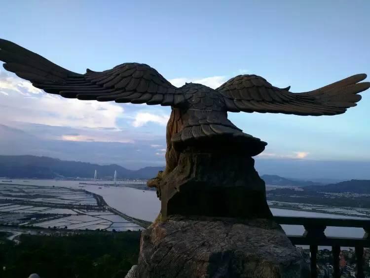 雄鹰m05_展翅高飞的雄鹰.