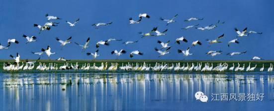 下月起万只鸟儿起舞鄱阳湖,观鸟地点全在这儿