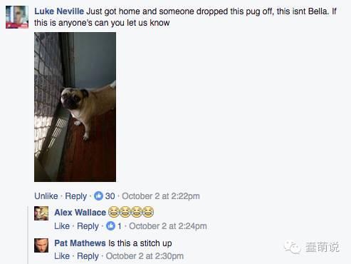 一网友家的巴哥犬走丢后,一连串逗逼的事发生了-蠢萌说