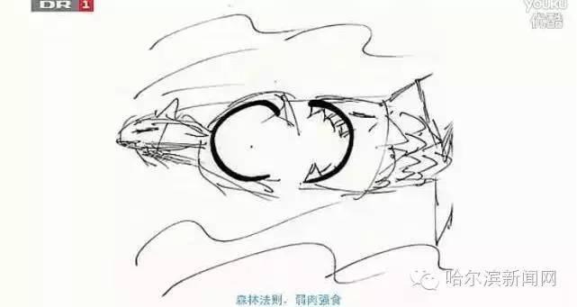 动漫 简笔画 卡通 漫画 手绘 头像 线稿 641_341