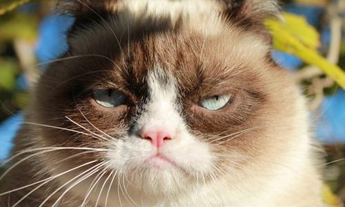 专为不爽而制《不爽猫》年底发布 自带表情包的猫咪
