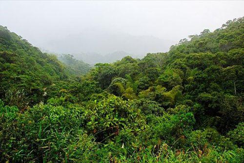 非洲海岛生长食人树(组图)