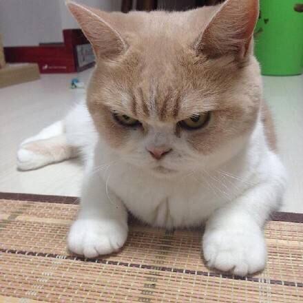 治愈系萌动物图片,看完烦躁的心情都没啦