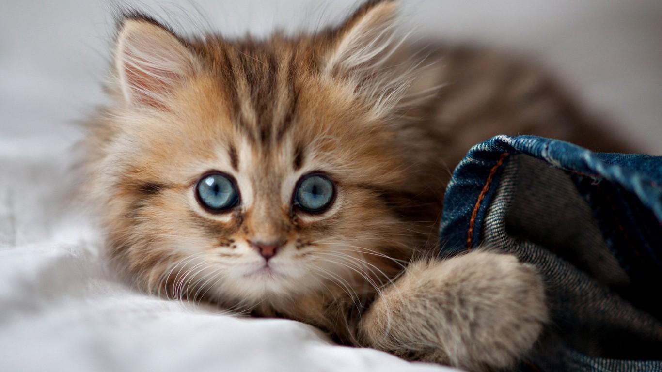 公猫绝育后的注意事项图片