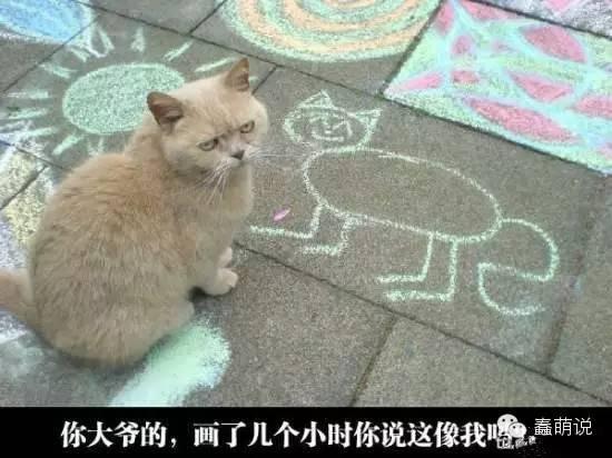 每日一蠢萌:第一次被羽毛挑逗的猫咪,竟陶醉在这美妙的奇痒中……-蠢萌说