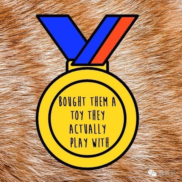 喵星人给猫奴颁布的14个小奖章,看看你能拿到多少?-蠢萌说