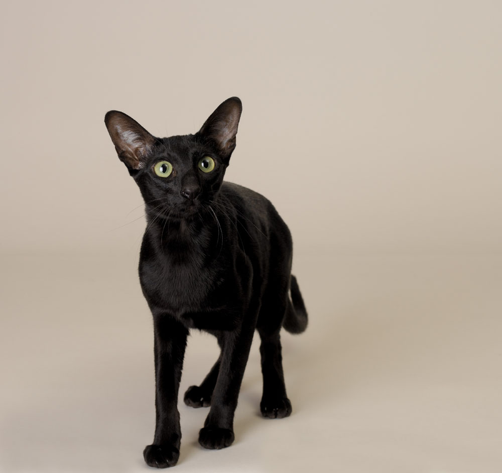 公猫绝育后要注意些什么图片