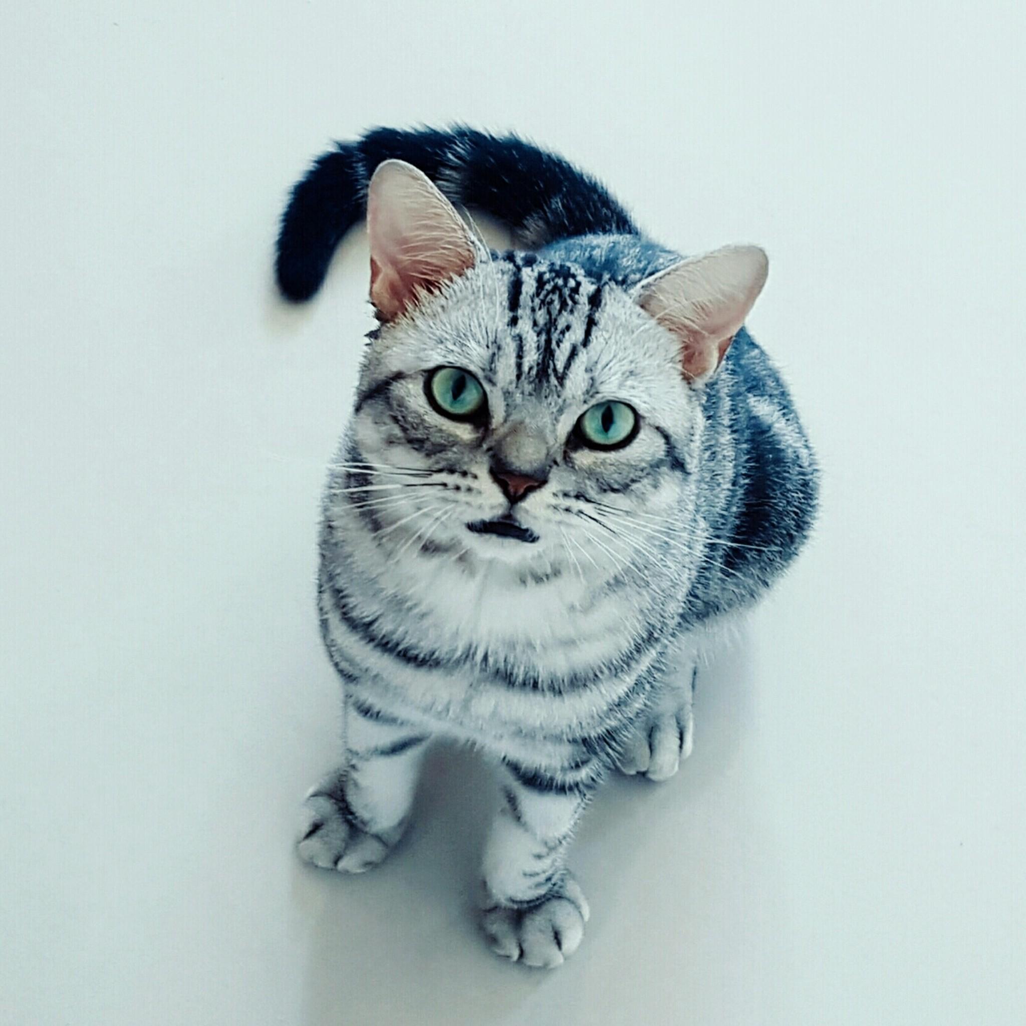 公猫绝育后要注意什么图片