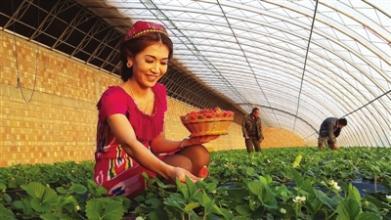 安邦智库:优化新疆发展要强化基层组织系统建设
