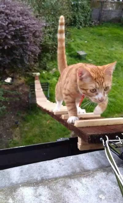 房东不让装猫门,科学家猫奴就打造一个天梯给猫咪-蠢萌说