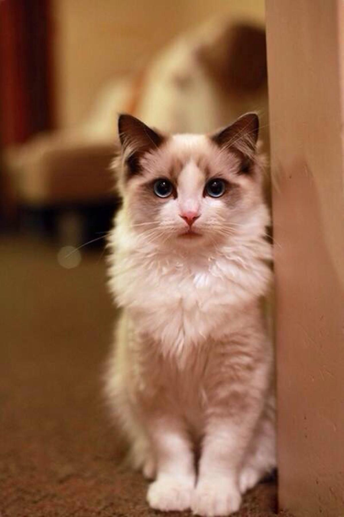 公猫绝育后应该注意什么图片