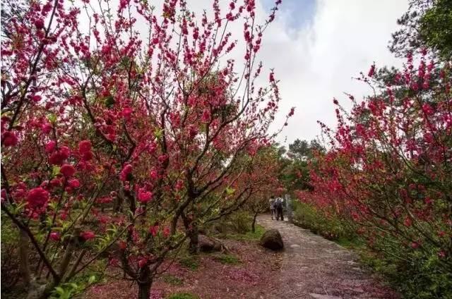 △白沙大道的木棉花和紫荆花