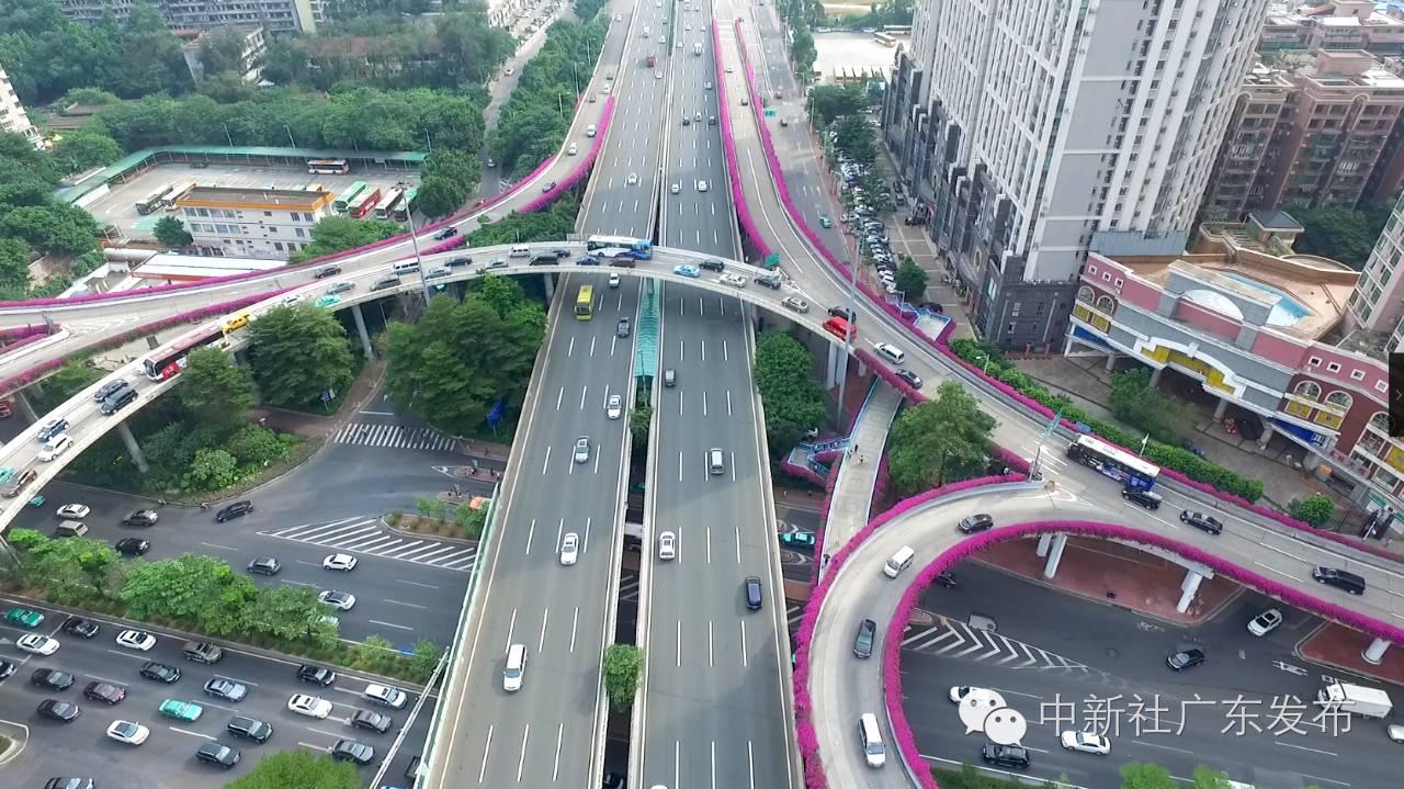 日前,中新社记者航拍了广州几条被紫红簕杜鹃装扮的立交桥,高架桥和