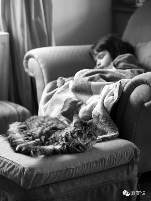 酷酷的缅因猫,简直就是自闭症患者最好的良药!-蠢萌说