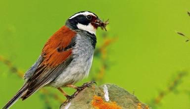 """察青松多新发现20多种鸟类,海螺沟惊现""""佛蝶"""""""""""