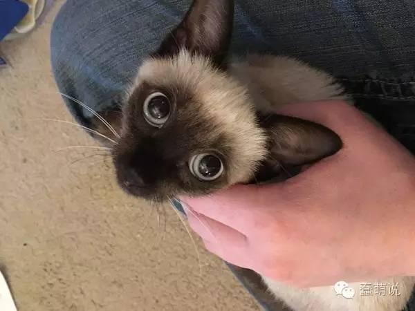路边捡到小幼猫原本眼里充满恐惧,现在只有满满的爱!-蠢萌说