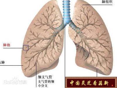 """警惕!!!可能是肺癌的十大信号【菇新灵芝】"""""""