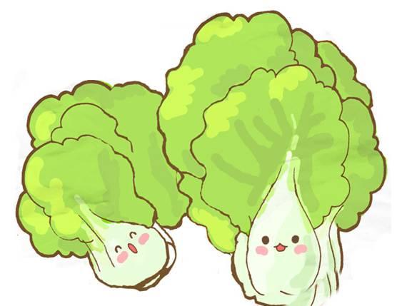 大白菜——八成抱心儿 青帮图片