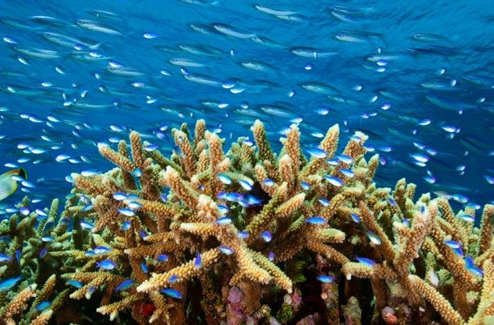 2250公里的珊瑚礁有超过90%被破坏.
