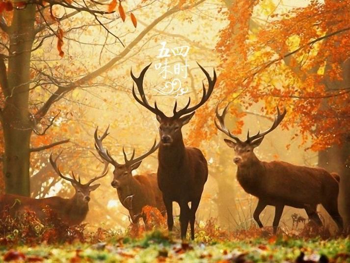 """收,是秋天本来的模样"""""""