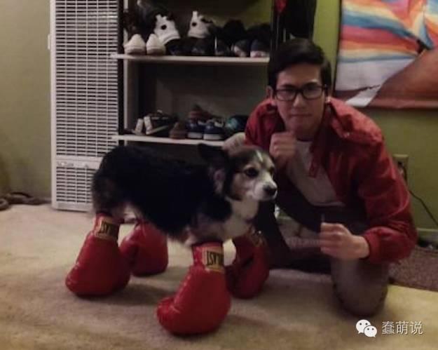 把狗狗装扮成这样,你跟狗商量过吗?-蠢萌说