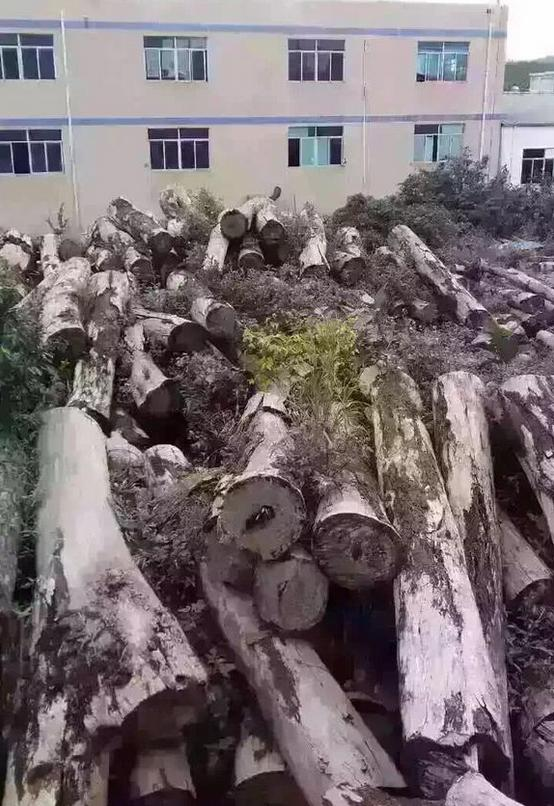 荒废木料厂被老人发现细看惊呆(图)