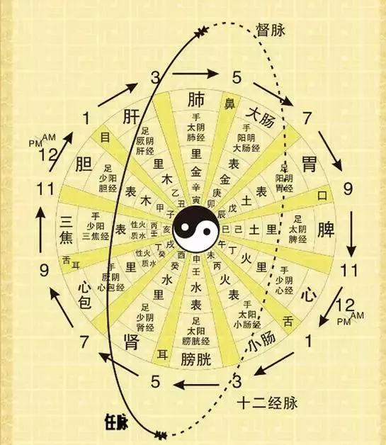十二时辰子午流注对照表-十二时辰的经络养生 1 胃与脾