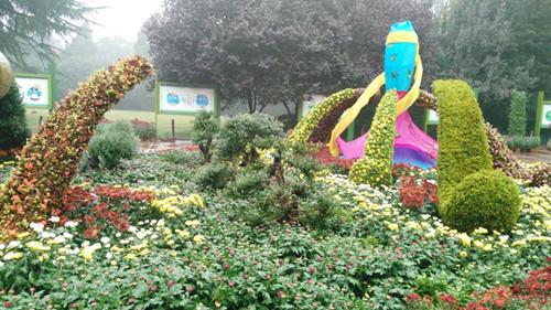 观菊何须远 周末到郑州人民公园看菊花展