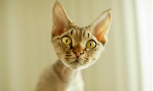 猫掉毛严重怎么解决图片