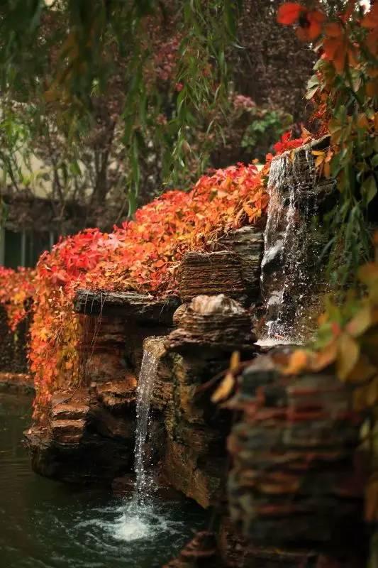 这些首诗一到秋天就美成了一学校!30所中小学西里新源北京小学图片