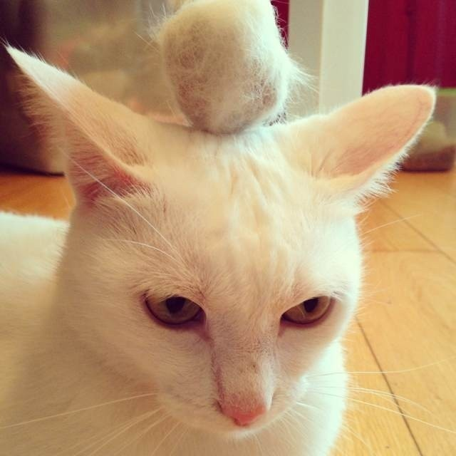 猫咪老掉毛怎么解决图片