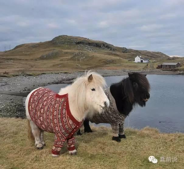 快到穿毛衣的季节了,宠物们说:人家也要!-蠢萌说