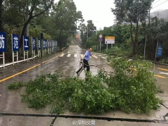 超强台风 海马 经过,深圳竟然成了这个样子