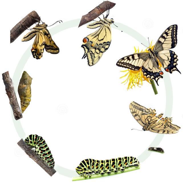 蝉是完全变态发育还是不完全