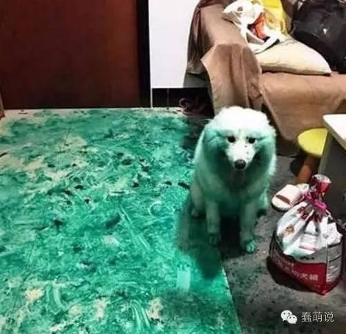 每日一蠢萌:萨摩耶化身大艺术家,吃狗肉的季节到了……-蠢萌说