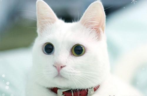 安哥拉猫生病常见的症状