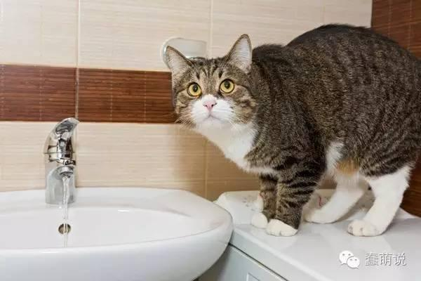 简单小方法,3秒钟就可以分辨猫咪是否脱水-蠢萌说