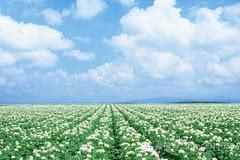 期间,宋清如发表了《春天又来了》《也许只是偶然》《我不愿再见我的