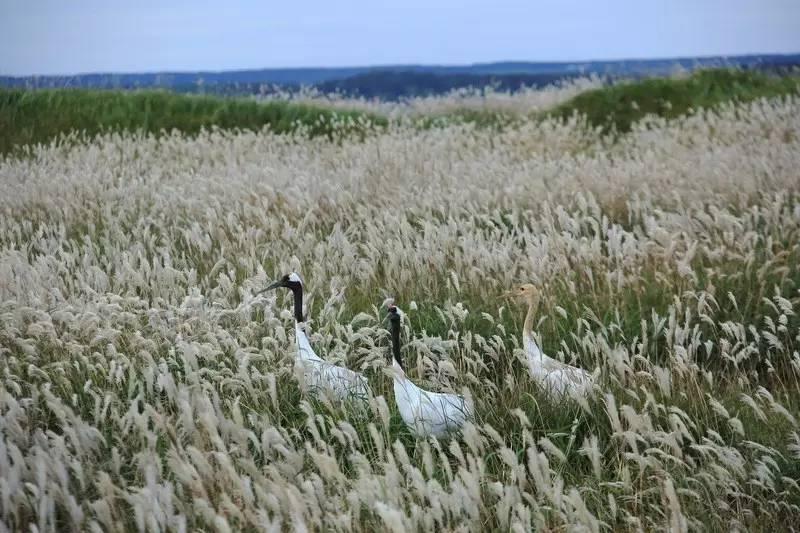 霜降:草木一岁一枯荣,早晚已有冬滋味