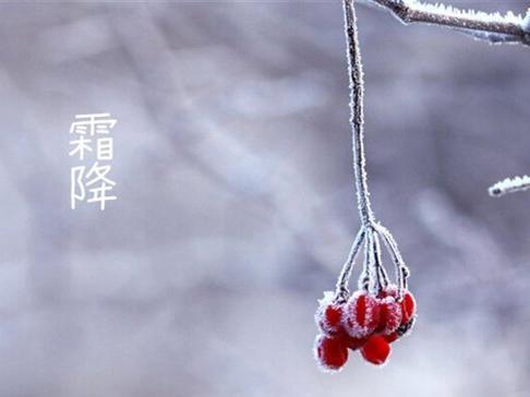 霜降到,吃柿子