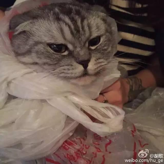 http://fashion.sohu.com/20161024/n471179109.shtml fashion.sohu.com true 格调美包 http://fashion.sohu.com/20161024/n471179109.shtml report 22445 1格格觉得世界上真的很少有人能够抗拒小动物的可爱~每次看到他们都会自然流露出温柔的样子,就像我看到杨洋一样哈哈哈!(其实是痴汉)。很多明星也对小动物们有特别的爱