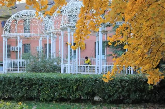 """京城校园之秋""""最终盘点来啦!哪个校园秋景最 ..."""