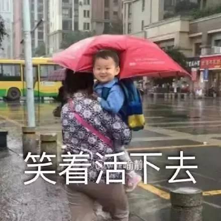 笑岔气:奶奶居然这样给孙子打伞瞬间爆红网络a奶奶表情包猫图片