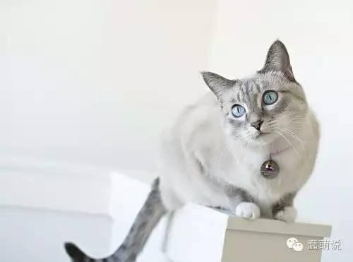 5秒钟测试你家猫咪到底喜不喜欢你!-蠢萌说