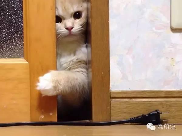 想治治自己的网瘾吗?赶紧养只猫吧!-蠢萌说