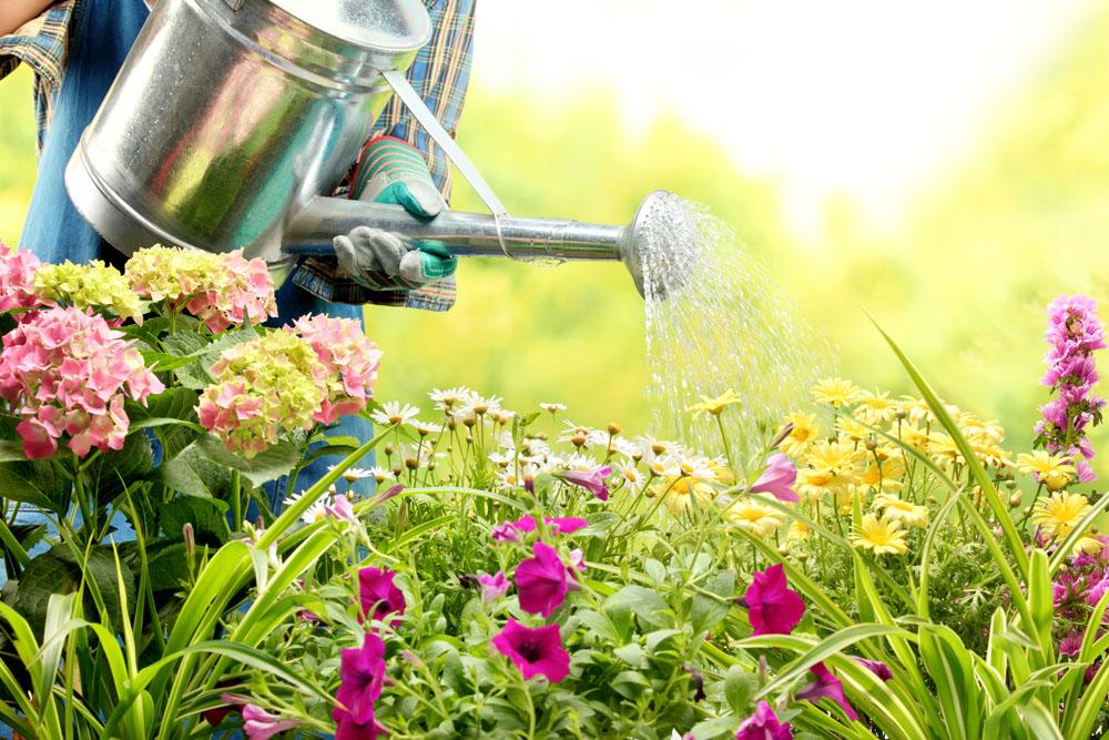 营养土直接种花图片