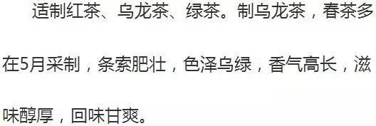 乌龙茶水仙的口感描述图片