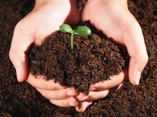 营养土种花图片