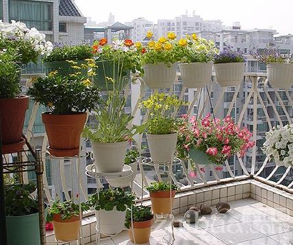 营养土能直接种花吗图片