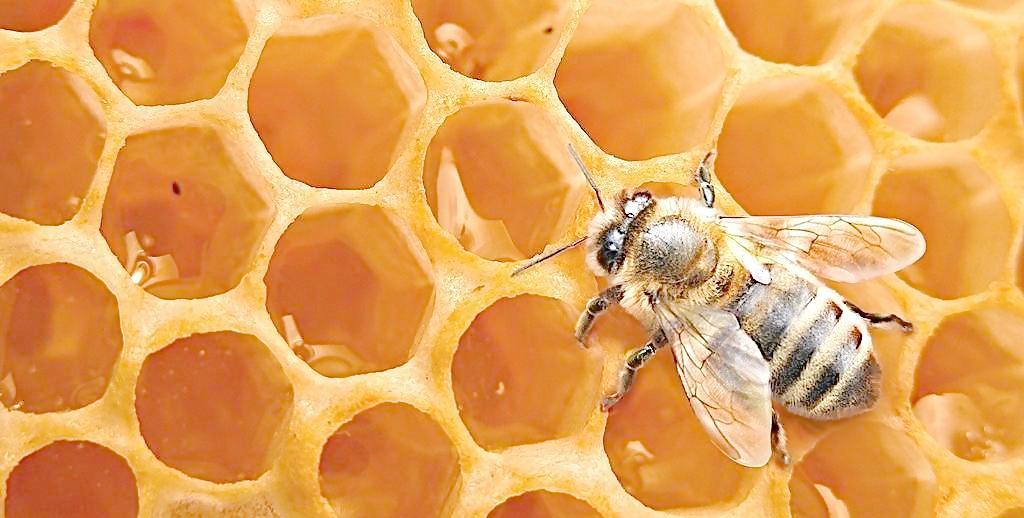 蜂蜜减肥法 排便图片